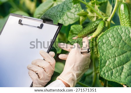 Biotechnology woman engineer with a clipboard and pen examining plant leafs for disease! - stock photo