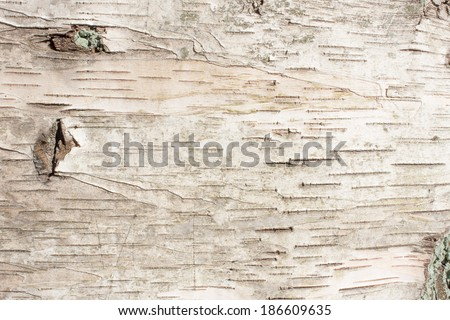 birch bark natural texture background - stock photo