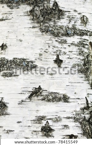 Birch Bark Texture - stock photo
