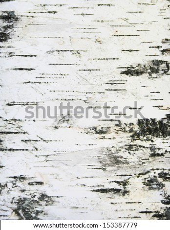 birch bark texture background paper - stock photo