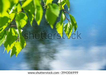 Birch branch with fresh leaves over water - stock photo