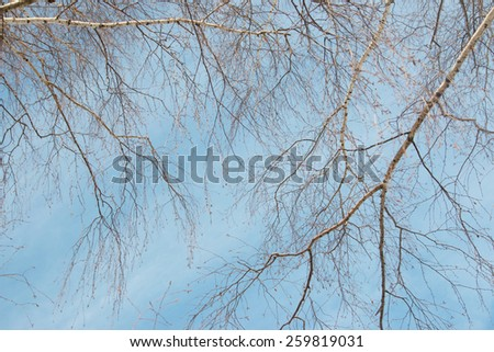 birch branches against the sky - stock photo