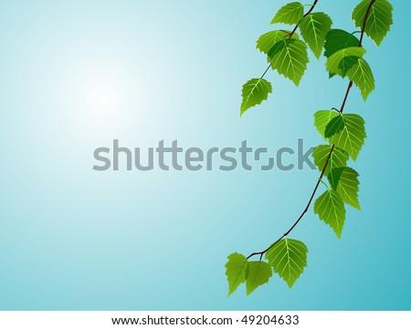 birch foliage on blue sky background - stock photo