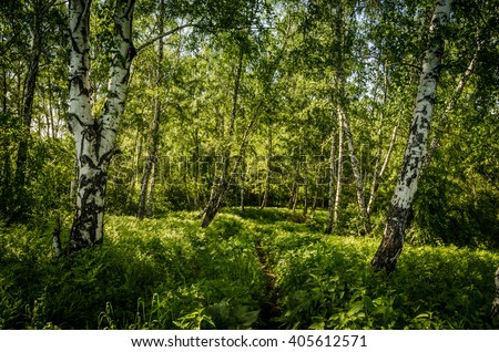 birch growing among dense green grass  - stock photo