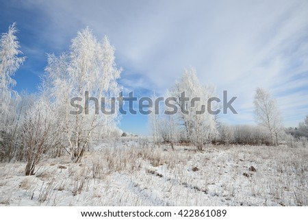 Birch tree forest covered with snow and rime. Winter view of Russian countryside. - stock photo