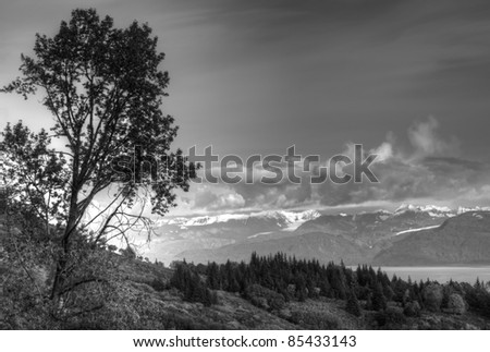Birch tree on a hillside near the Kachemak Bay in Alaska with mountains and dramatic clouds in black and white