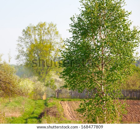 Birch tree on a plowed field in spring