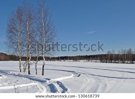 Birch trees and snowy field on the village outskirts