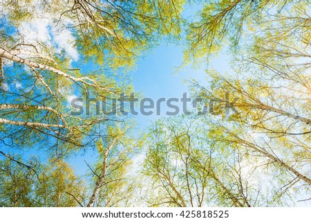 Birch with green leaves in spring forest against the sky. Beautiful spring landscape - stock photo