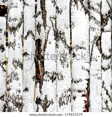 birch wood fence texture - stock photo