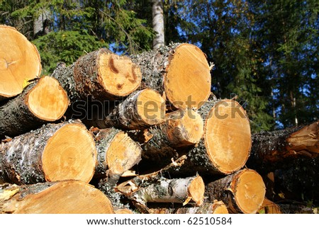 Birch Wood Logs in Forest Ready for Transport - stock photo