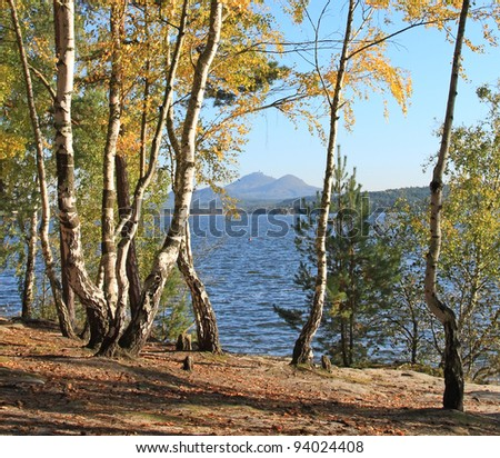 Birch wood on the bank of lake, in the background castle Bezdez, Czech Republic