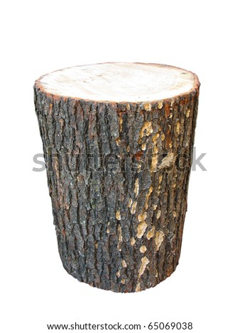 Birch wooden log isolated on white background - stock photo