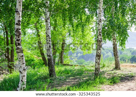 Birch-woods of the Tsaryov Hill in Samara Region.