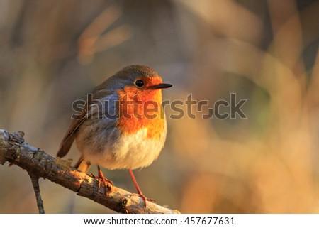 bird - a symbol of Christmas bird on a branch, sunny morning, bright colors - stock photo