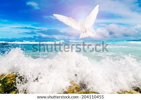 Bird above the ocean - stock photo