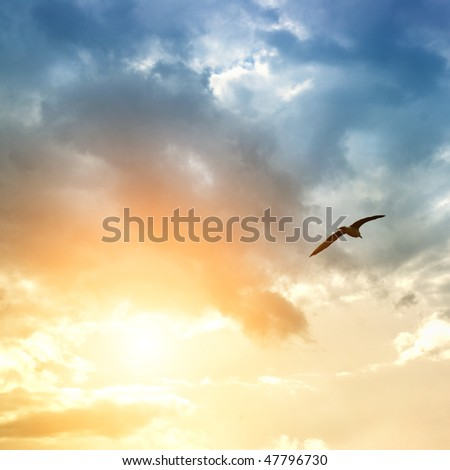 bird and dramatic clouds - stock photo
