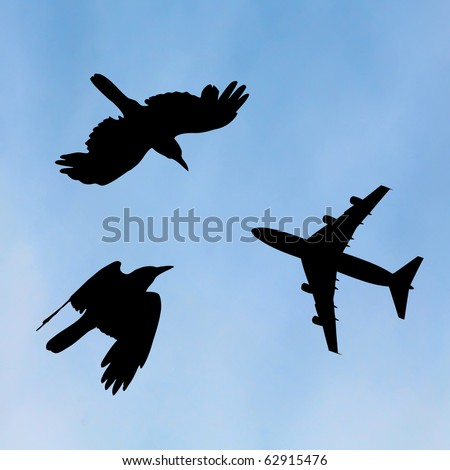 bird and plane flying black silhouette composition on sky background
