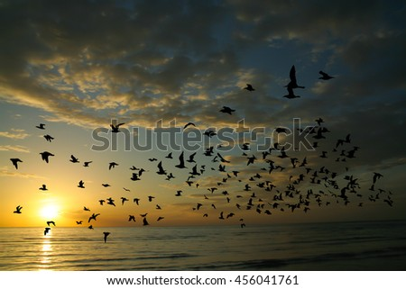 Bird and sea on Morning time
