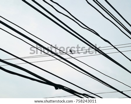 bird and wire