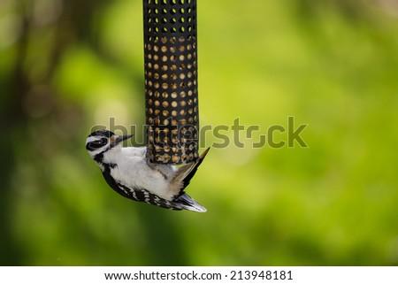 Bird at feeder in backyard - stock photo