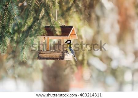 bird, bird feeders, sparrow, background wallpaper - stock photo
