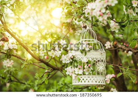 Bird cage on the apple blossom tree in sunset. - stock photo