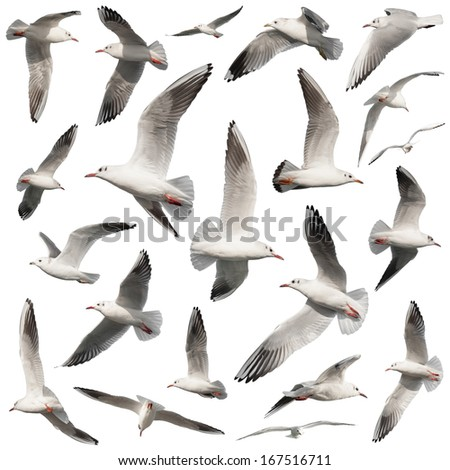 bird collection on white - stock photo