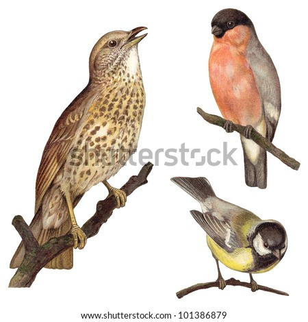 Bird collection - Redwing (Turdus iliacus), Bullfinch (Pyrrhula europaea), Great Tit (Parus major) / vintage illustration from Meyers Konversations-Lexikon 1897 - stock photo