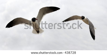 Bird couple - stock photo