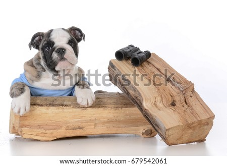 bird dog bulldog with binoculars on white background