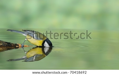 Bird drinking water from the shore. - stock photo