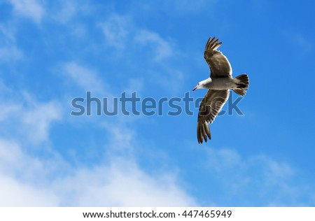 Bird during the flight. Portrait of a Seagull flying on the blue sky background.