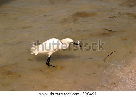 Bird Eating - stock photo
