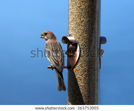 Bird eating at a bird feeder