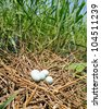 Bird eggs and nest - stock photo