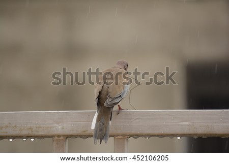 Bird enjoying monsoon