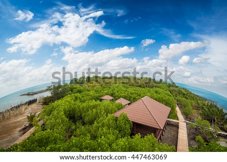 Bird eye view of tropical mangrove forest at coast on blue sky background - stock photo