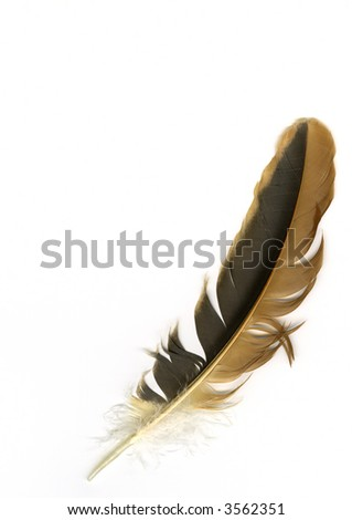 Bird feather - stock photo