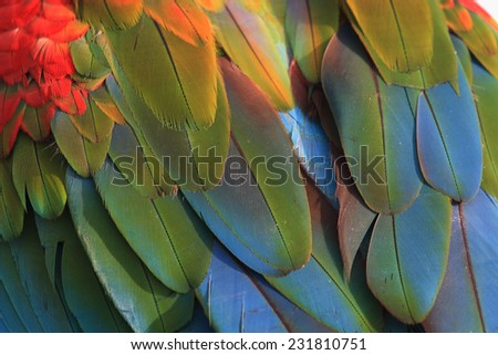 Bird feather, beautiful pattern background texture,Macaw feathers.