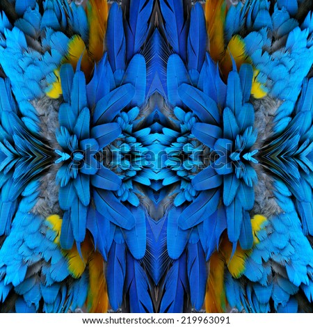 Bird feathers, beautiful pattern background texture made from Blue and Gold Macaw feathers. - stock photo