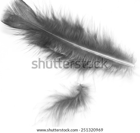 bird feathers on a white background