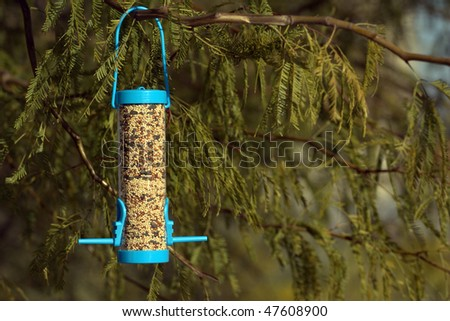Bird feeder on a mesquite tree - stock photo