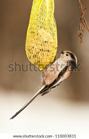 bird feeders at - stock photo
