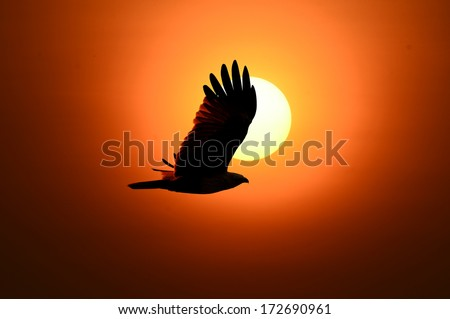 Bird flew into the shadows of the evening sun.  - stock photo