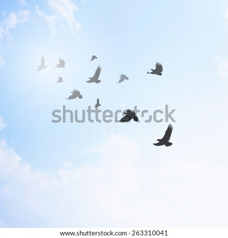 bird fly in bright blue skies and bright sun. - stock photo