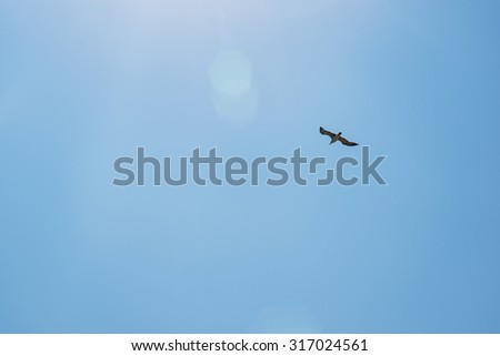 Bird flying in the sky