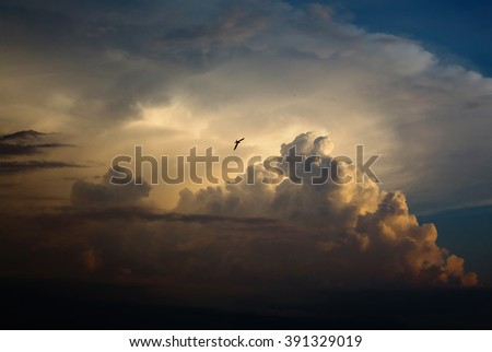 bird flying in the sky, a large pearl cloud, fluffy cloud like a mountain, a swallow flying in the sky in the distance, sunset light, the day ends - stock photo