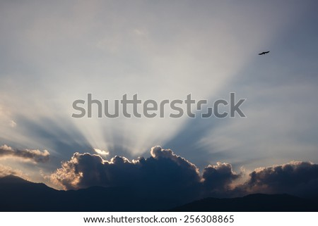 bird flying in the sunset shining behind clouds - stock photo