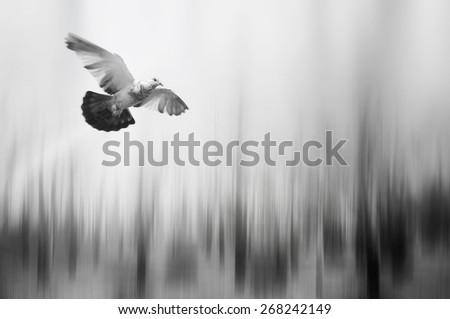 bird flying in woodland blur background - stock photo